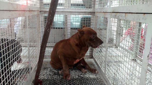 ¡FOTOGALERÍA/ 2 perros pitbull atacaron a una niña en Aguascalientes y la dejaron al borde de la muerte!