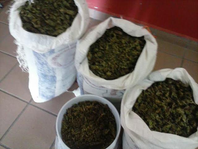 ¡Detuvieron a un aguascalentense y a 2 zacatecanos con 25 kilos de marihuana en Calvillo!