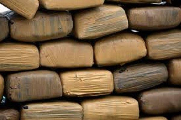 ¡Aseguró la Policía Federal más de 2 toneladas de marihuana en B.C. y Chihuahua!
