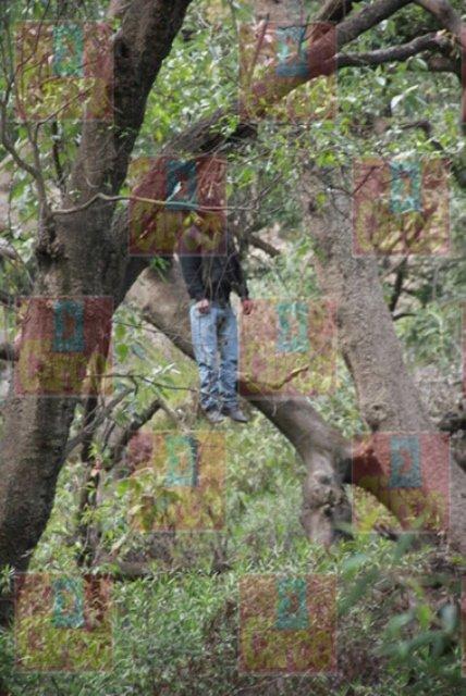 ¡Hallaron a un hombre colgado en un árbol en Lagos de Moreno!