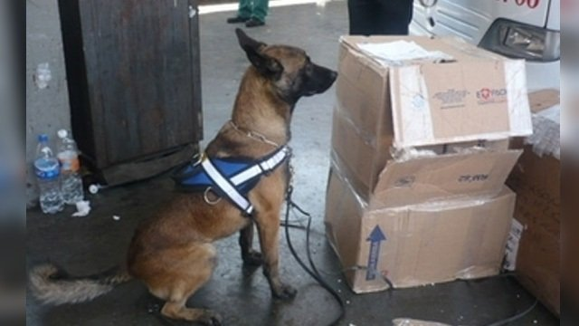 ¡Policías federales aseguraron paquete de droga en Tlaquepaque con destino a Aguascalientes!