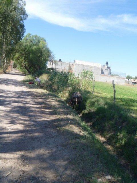 ¡Ejecutaron de un balazo en la cabeza a un adolescente en Jerez!