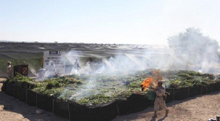 ¡Incineran 3.2 toneladas de marihuana en Ensenada!