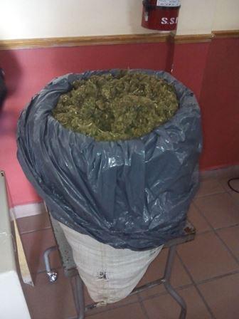 ¡Atraparon a un narcotraficante con 8.5 kilos de marihuana en Aguascalientes!