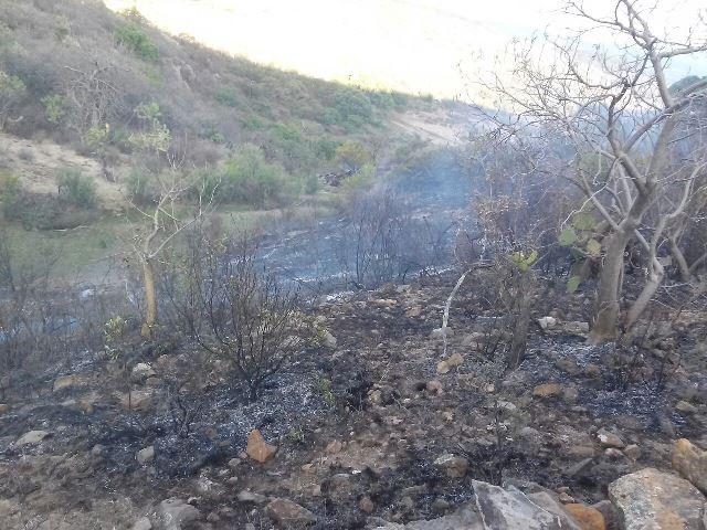 ¡Joven jornalero murió intoxicado tras un incendio en una nopalera en Aguascalientes!