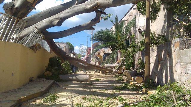¡Protección Civil atiende árbol caído en Presa de los Serna, Calvillo!