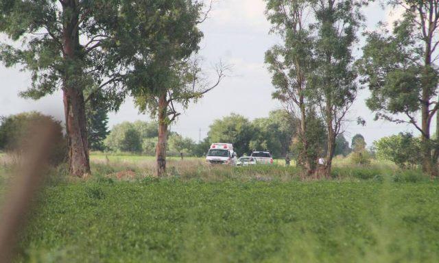 ¡Abejas atacaron a una familia en Zacatecas: 1 muerta y 6 lesionados!