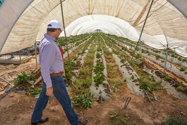 ¡La innovación en el campo debe ser un eje central del desarrollo agropecuario en la entidad: MOS!