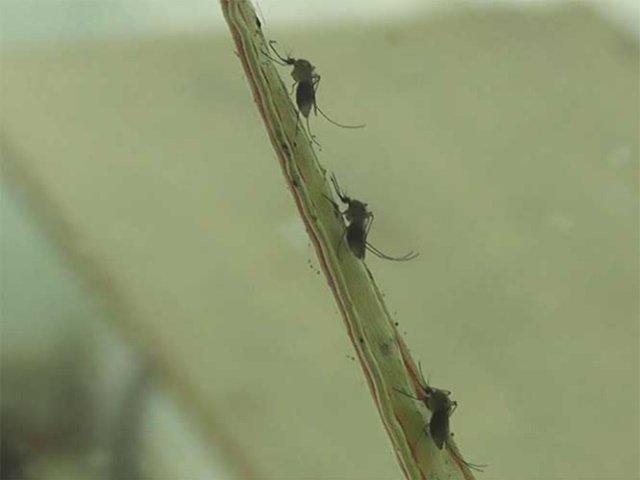 ¡Detectan primer caso de Zika en Aguascalientes!