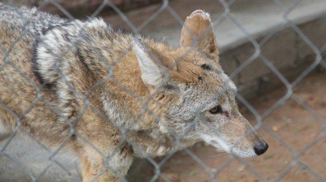 ¡Sacrifican animales contagiados de tuberculosis en parque público de Aguascalientes!