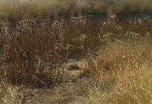 encuentran-osamenta-humana-en-camino-de-terraceria-en-aguascalientes_01