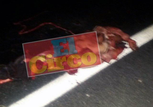 ¡Peatón murió destrozado por varios vehículos en San Juan de los Lagos!