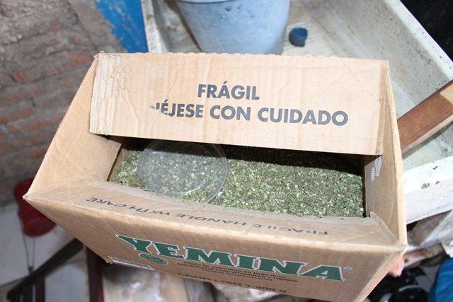 ¡Decomisaron más de 17 kilos de marihuana tras un cateo domiciliario en Aguascalientes!