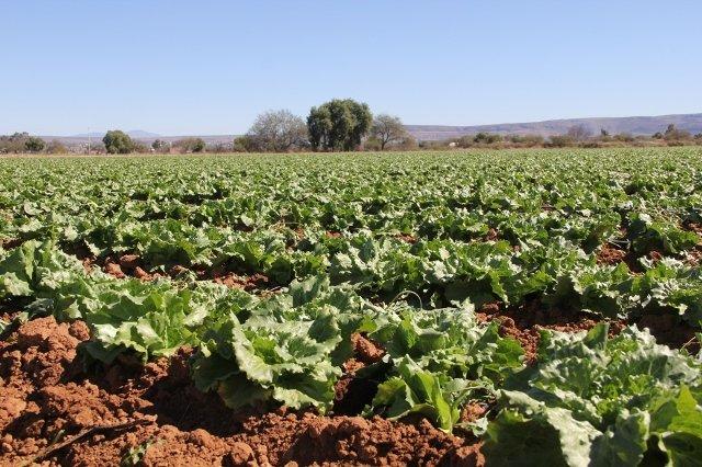¡Más de 2 millones 700 mil toneladas es el volumen de producción agrícola en el precierre del 2016!