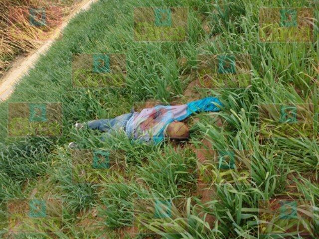 ¡Hallaron a un hombre ejecutado en un sembradío de alfalfa en Lagos de Moreno!