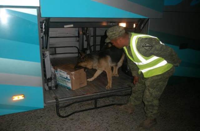 ¡Militares decomisaron droga y pólvora en 2 autobuses en Aguascalientes!