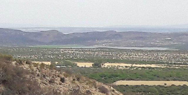 ¡Irresponsabilidad de CONAGUA provoca ecocidio en la presa Abelardo L. Rodríguez en Aguascalientes!