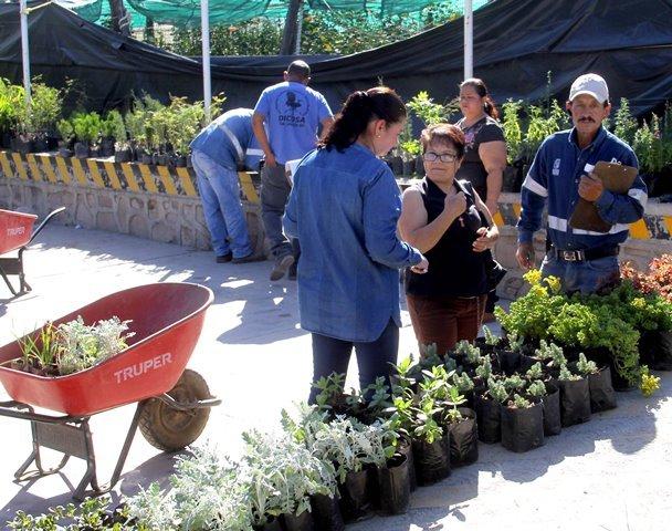 ¡Impulsa el Gobierno Municipal una cultura ecológica ciudadana mediante la donación de plantas!
