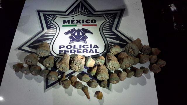 ¡Policías federales detuvieron a una persona con peyote en la autopista León-Aguascalientes!