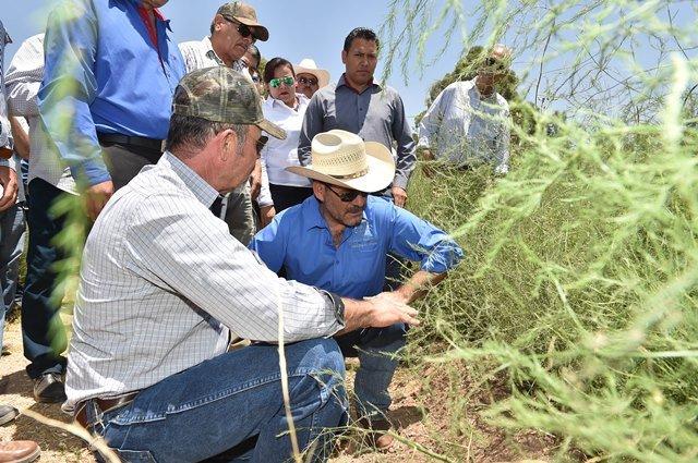¡Impulsa Gobierno reconversión a cultivos que hagan uso más eficiente de agua!