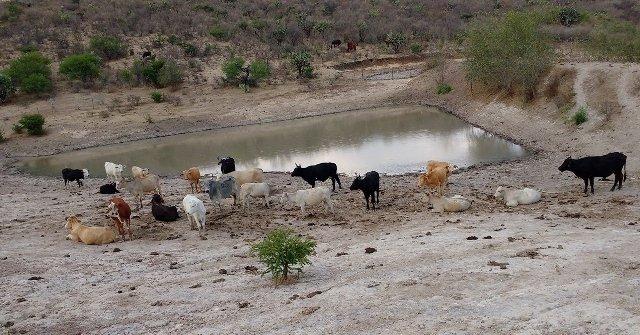 ¡Inicia Ayuntamiento de Pabellón de Arteaga campaña contra el robo de ganado!