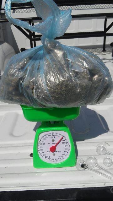 ¡Detuvieron a traficante de drogas con más de medio kilo de marihuana en Aguascalientes!