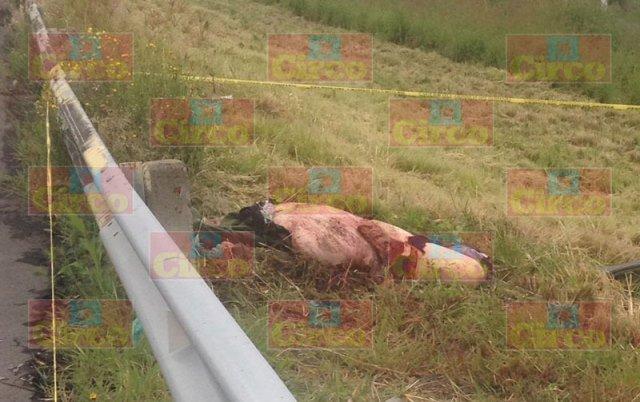 ¡1 muerto y 1 lesionado tras fuerte accidente en Lagos de Moreno!
