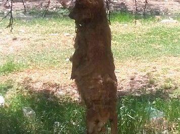 ¡Sin respuesta muerte de perro en Rincón de Romos: PVEM!