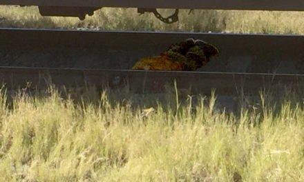 """¡Muere un hombre decapitado al ser arrollado por """"La Bestia"""" en Aguascalientes!"""