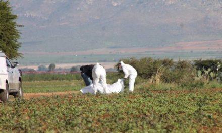 ¡Hallaron una osamenta humana en unos campos de cultivo en Guadalupe, Zacatecas!