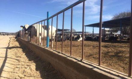 ¡Pretende Ayuntamiento de Pabellón de Arteaga iniciativa regional para regularizar ganado!