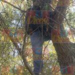 ¡Hallaron a un joven colgado de un árbol en Lagos de Moreno!