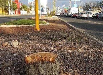 ¡Más pasos a desnivel pero menos árboles: PVEM!
