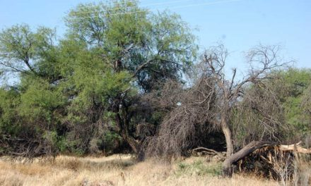 ¡Necesario que se expropie La Pona para evitar un grave daño ambiental!