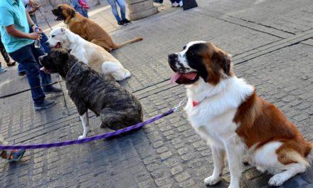 ¡Promueve Municipio de Aguascalientes empadronamiento de mascotas!