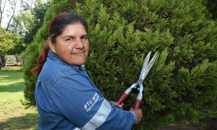 ¡Municipio de Aguascalientes reconoce el gran valor de sus jardineros!