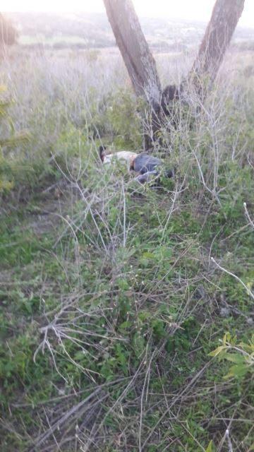 ¡Joven se suicidó en Aguascalientes colgándose de un árbol!