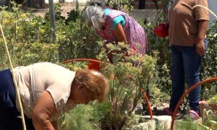 ¡Familias del Municipio empiezan a cultivar sus propios alimentos!