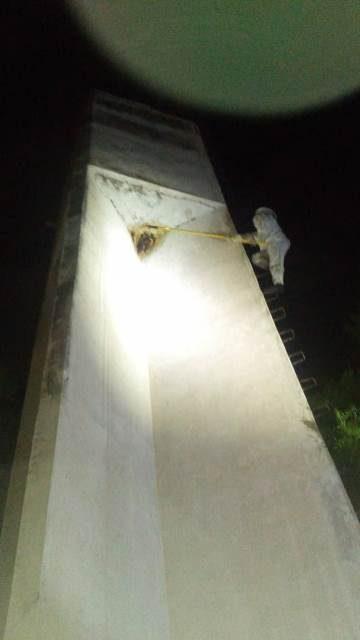 ¡Colonia de abejas atacó a 20 personas y mató a una yegua en Tepezalá, Aguascalientes!