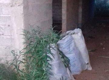 ¡Localizó la PEP en Calera 6 costales con marihuana en una tapia abandonada!
