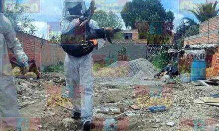 ¡Panal de abejas causó la muerte a un caballo y lesiones graves a dos potrillos en Ojuelos, Jalisco!