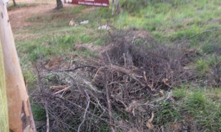 ¡Talan árboles para crecer más el estacionamiento en el Cerro del Muerto: Partido Verde!