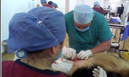 ¡Continúa ISSEA con las jornadas de esterilización de mascotas!