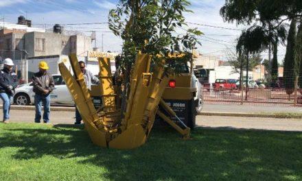 ¡Inician los trabajos previos para el trasplante de los árboles ubicados en la zona del paso a desnivel de San Ignacio!