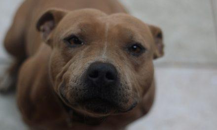 ¡Aplican las primeras sanciones contra el maltrato animal en Pabellón de Arteaga!