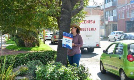 ¡Reubicarán árboles de la zona del paso a desnivel del antiguo camino a San Ignacio!