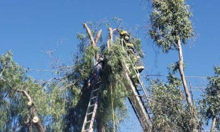 ¡Jardinero murió electrocutado al estar podando un árbol en Aguascalientes!