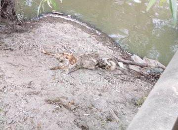 ¡Identificaron la osamenta encontrada en el Río San Pedro en Aguascalientes!
