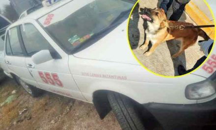 ¡Realiza el grupo K-9 la detención de 3 personas con droga a bordo de un Taxi de Zacatecas!