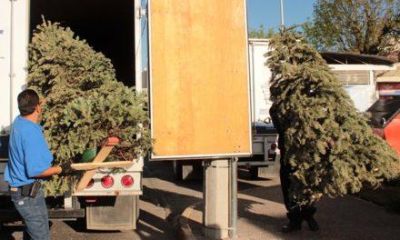 ¡Municipio de Aguascalientes inicia campaña de acopio de árboles navideños!